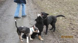 Junghunde Bonn