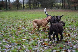 Hundeschule Bad Honnef